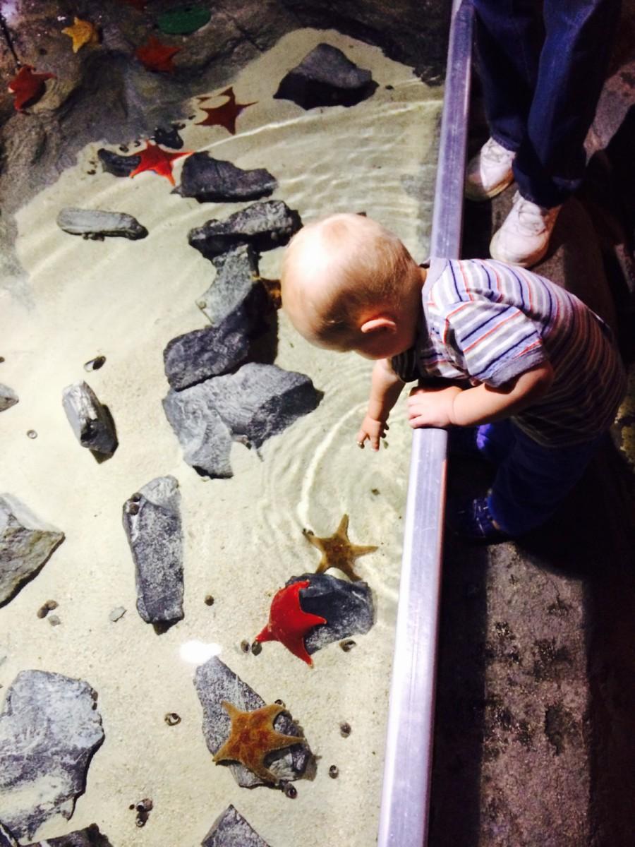 Austin Aquarium Solis Realty Group