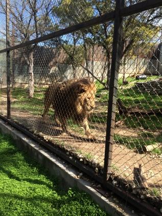 The Austin Zoo